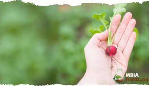 Programa para jovens agricultores