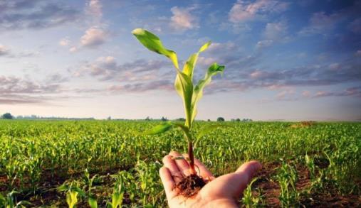 Modificar a visão sobre OGM