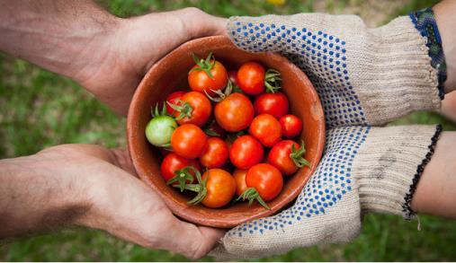 """Agroalimentar: """"espinha dorsal"""" da economia"""