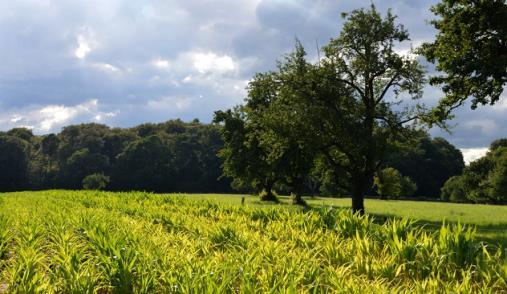 Indústria comprometida com biodiversidade