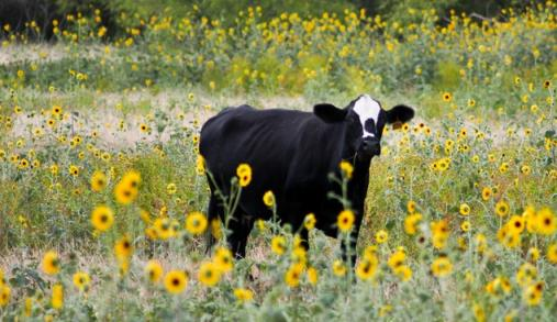Biodiversidade: medir e monitorizar