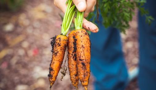 Agricultura biológica em consulta
