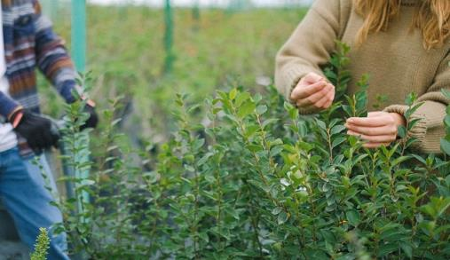 Europa quer mais produção biológica